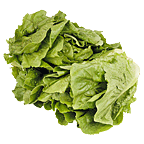 how to cut head of romaine lettuce